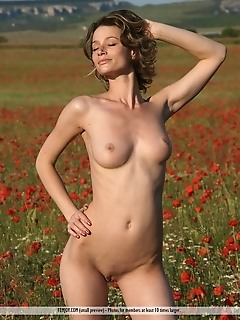 poppies this photo set finds abby completely naked in a field of red flowers. Her body glows with a natural health and radiance, and her freckles prac